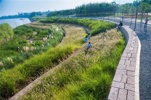生態系統,用來保護現存的濕地,以及臺地風格的堤壩,與洪水為友,使公園圖片