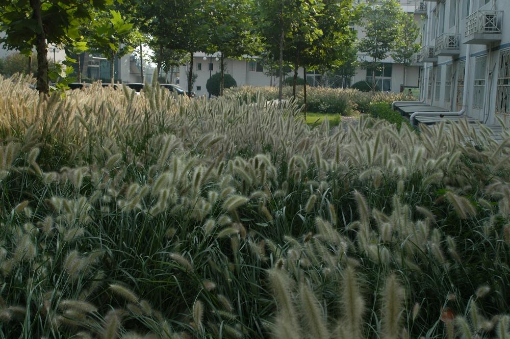 北京校园下雨的照片